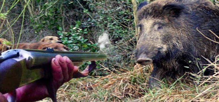 Dalla maggioranza un via libera alle scorribande dei cacciatori. Per il contenimento della fauna selvatica servono invece risorse e strumenti adeguati